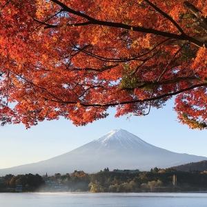 富士山楓葉_河口湖北岸