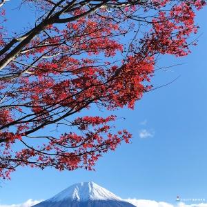 富士山楓葉_田貫湖