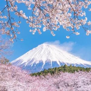 富士山櫻花_岩本山公園