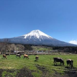富士山牛牛_富士山高原 COW RESORT IDEBOK
