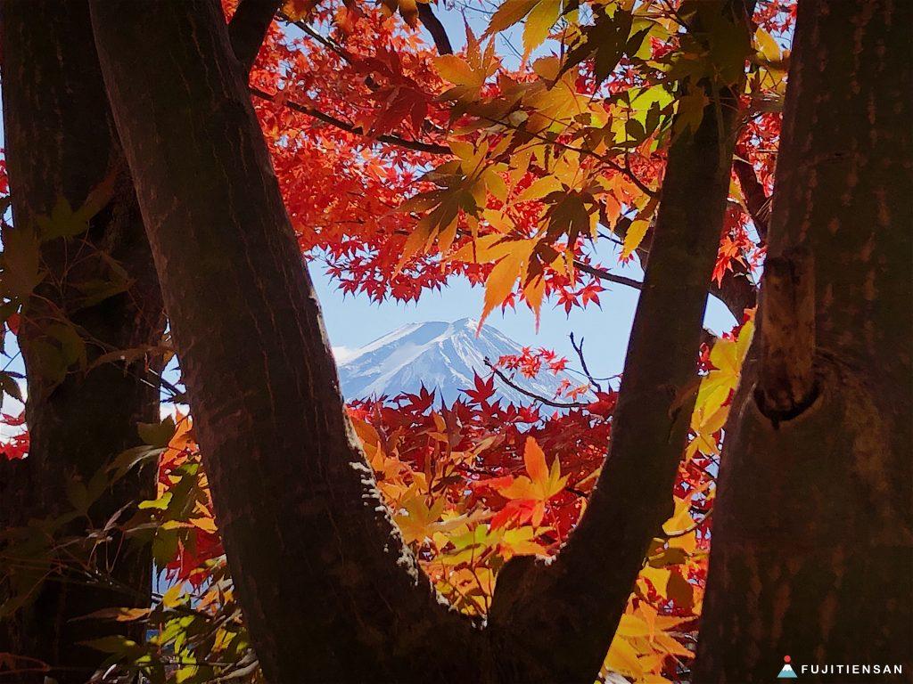 河口湖紅葉祭富士山産屋ヶ崎