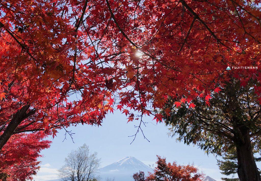河口湖紅葉祭富士山紅葉迴廊
