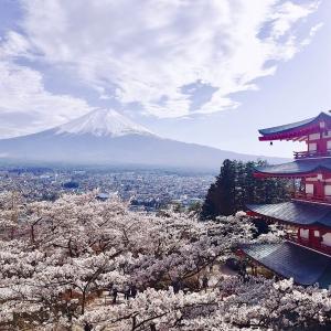 富士山櫻花_新倉山淺間公園