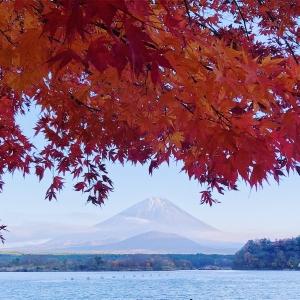 富士山楓葉_精進湖