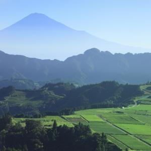 富士山茶園 清水吉原