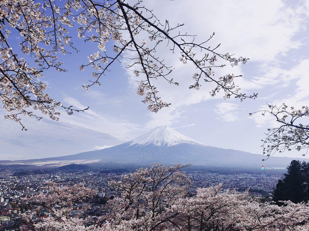 富士山櫻花_新倉山淺間公園1