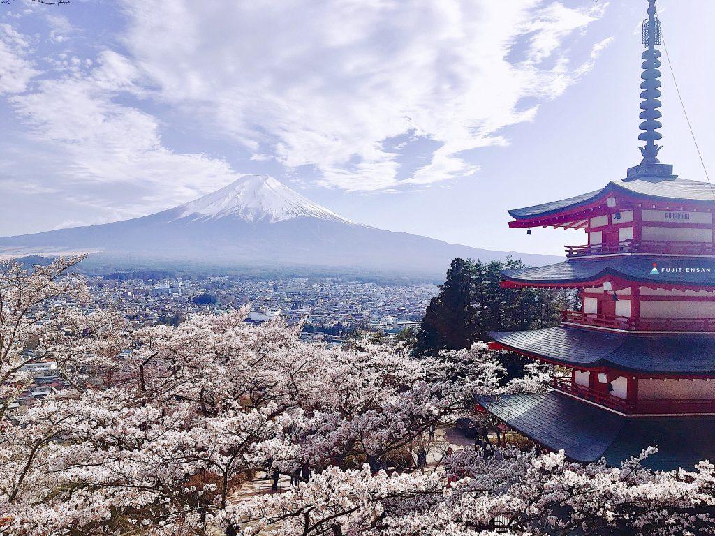 富士山櫻花_新倉山淺間公園_五重塔
