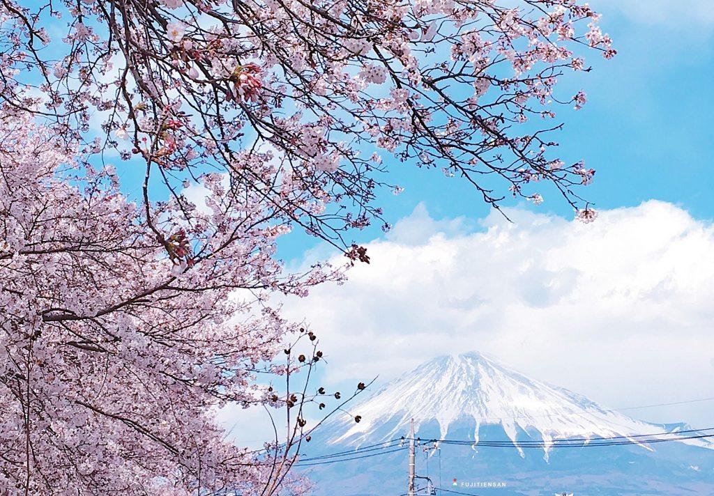 富士山櫻花_潤井川龍巖淵6
