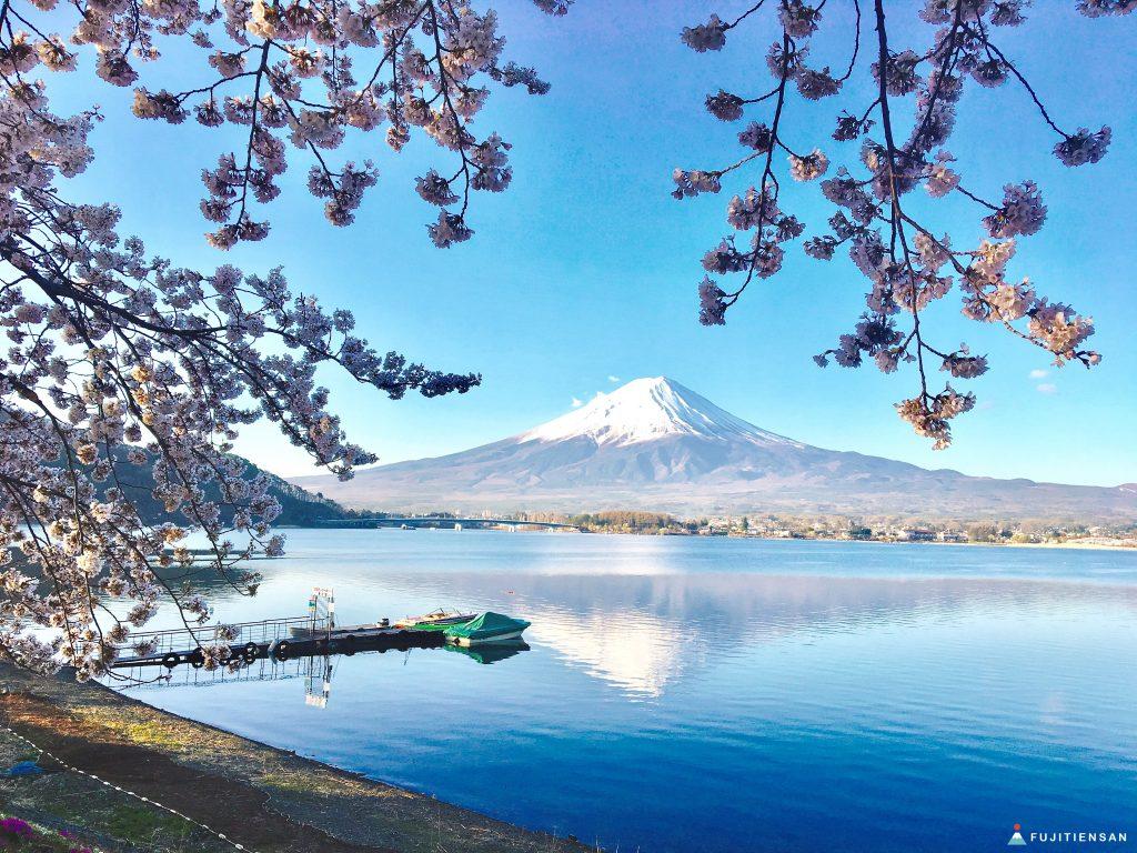 富士山櫻花_河口湖北岸_逆富士